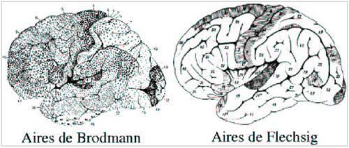 cerveau et psycho 69 pdf